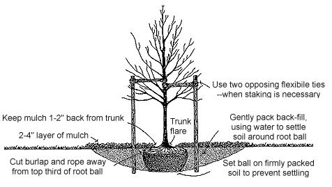landscaping-tree-shrubs